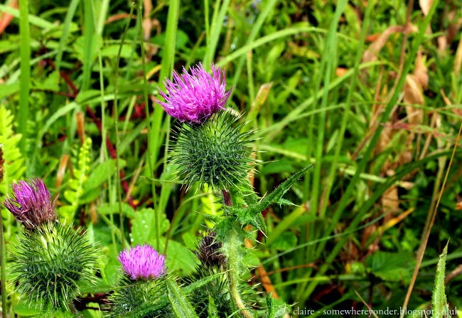 Thistle - Commonwealth Games 2014