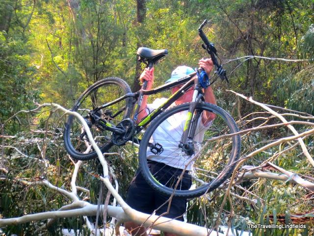 Fallen tree on the Gippsland Lakes Discovery Trail, East Gippsland