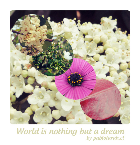 World is nothing but a dream,pablolarah,Pablo Lara H Blog,photography,flowers,Jack Kerouac