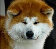 Jenis Anjing Ras
