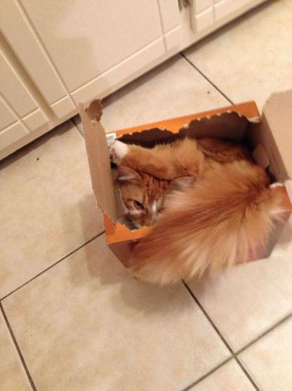 Funny cats - part 59 (30 pics + 10 gifs), funny photo of cats, kitten photos, funny pics, cat and kitten pics