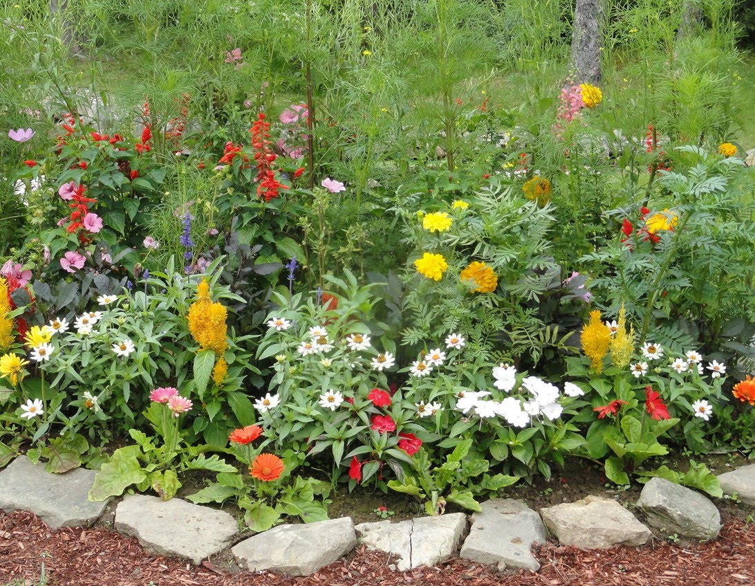 Free flower garden ideas photograph free flower pictures for Small flower bed plans