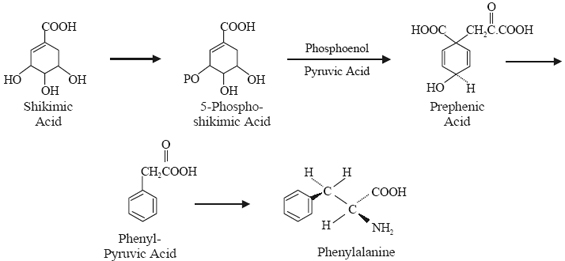 Phenylalamine Pathway