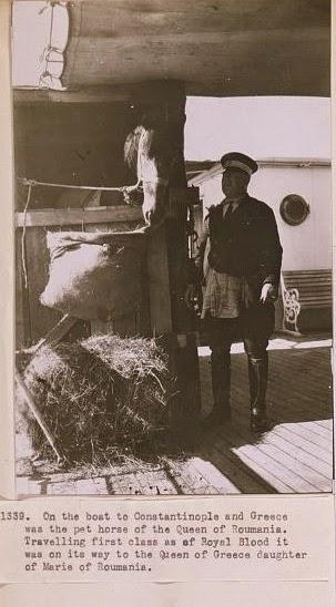 Calul Reginei Maria pe vapor