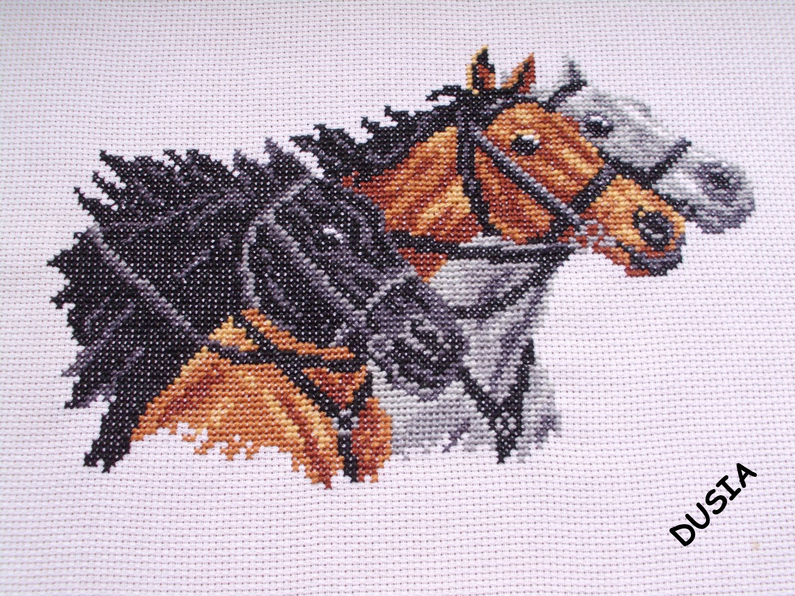Konie - obraz