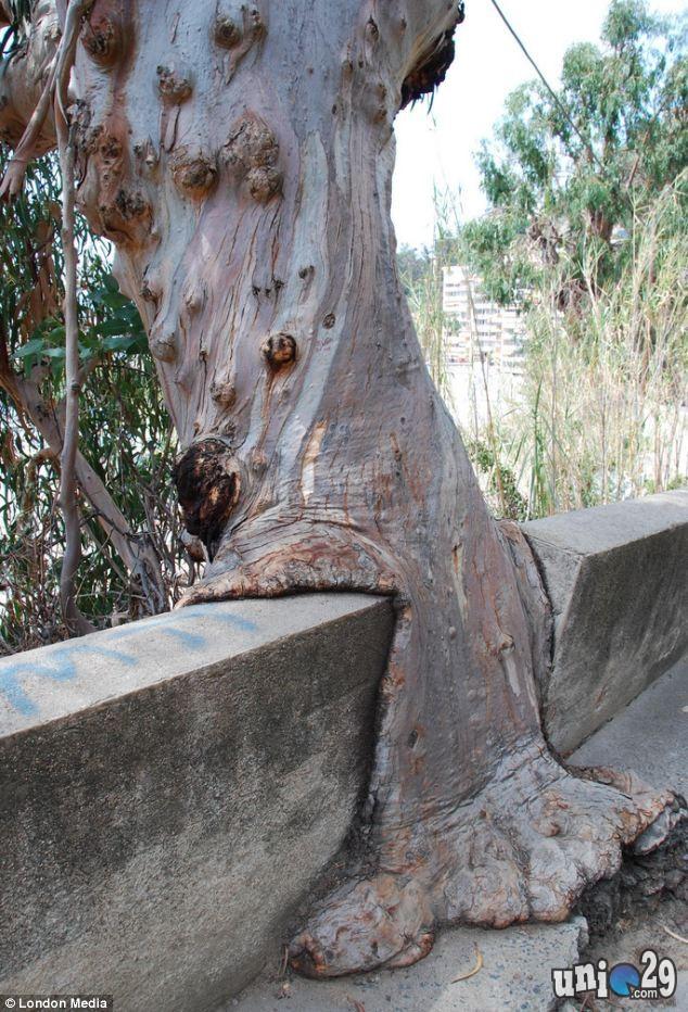 Foto Pohon Aneh Yang Dapat Memakan Apa Saja - Anomali Dunia