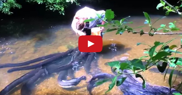 Chantrea Cambodia  City new picture : Stephanie Bowman feeding eels at Pukaha | Siem Reap