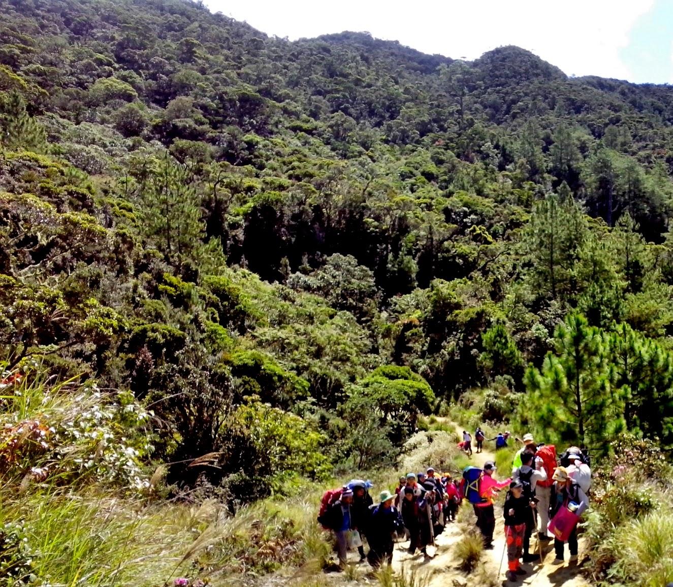 Mt. Pulag Ambaneg Trail