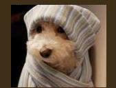 Cão Inverno
