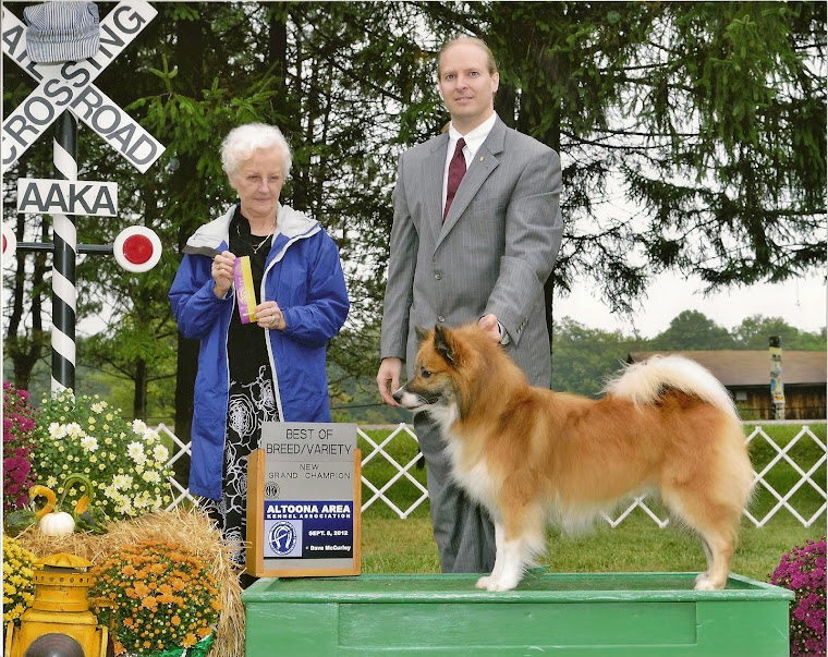Solstafir receives his AKC Grand Championship!
