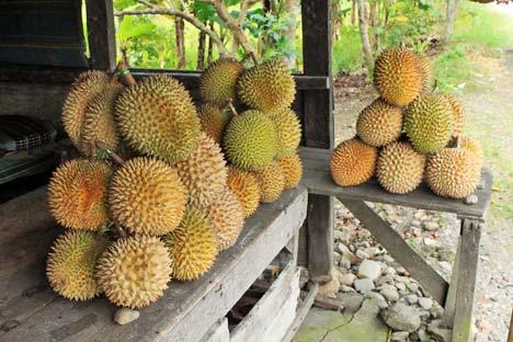 Cara Memilih Buah Durian