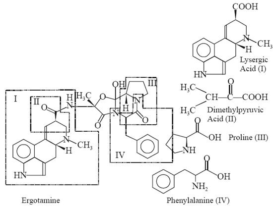Ergotamine Phenylalanine (IV)