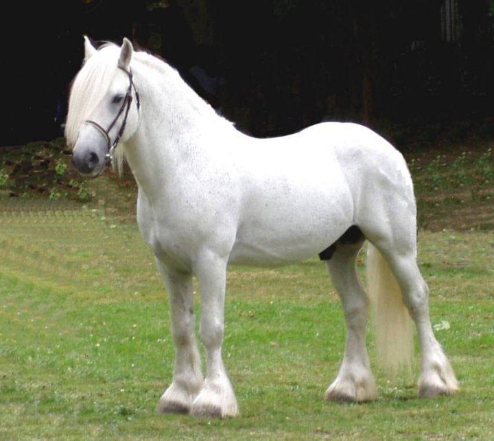 ... había un novedoso ocupante detenido se trató de un caballo