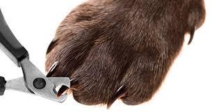 DIY, Como Cortar las Uñas a los Perros