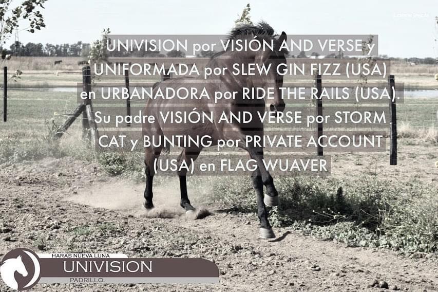 HS LUNA NUEVA - UNIVISION
