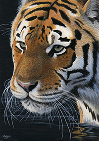 ACEO Limited Edition Wildlife Art Prints