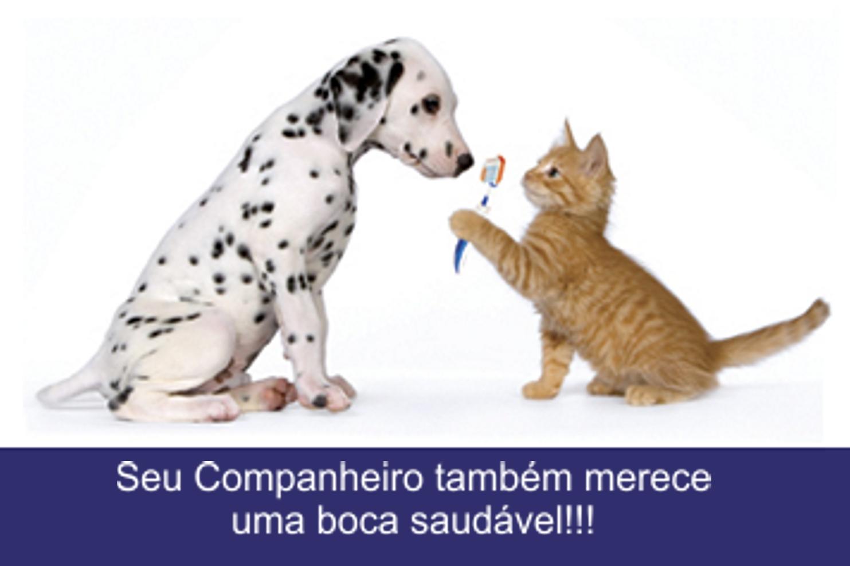 Veterinário em Domicílio * * Cães e Gatos *