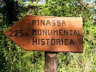 Indicador de la direcció a seguir per anar a veure la Pinassa monumental
