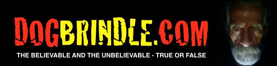 DOGBRINDLE.COM