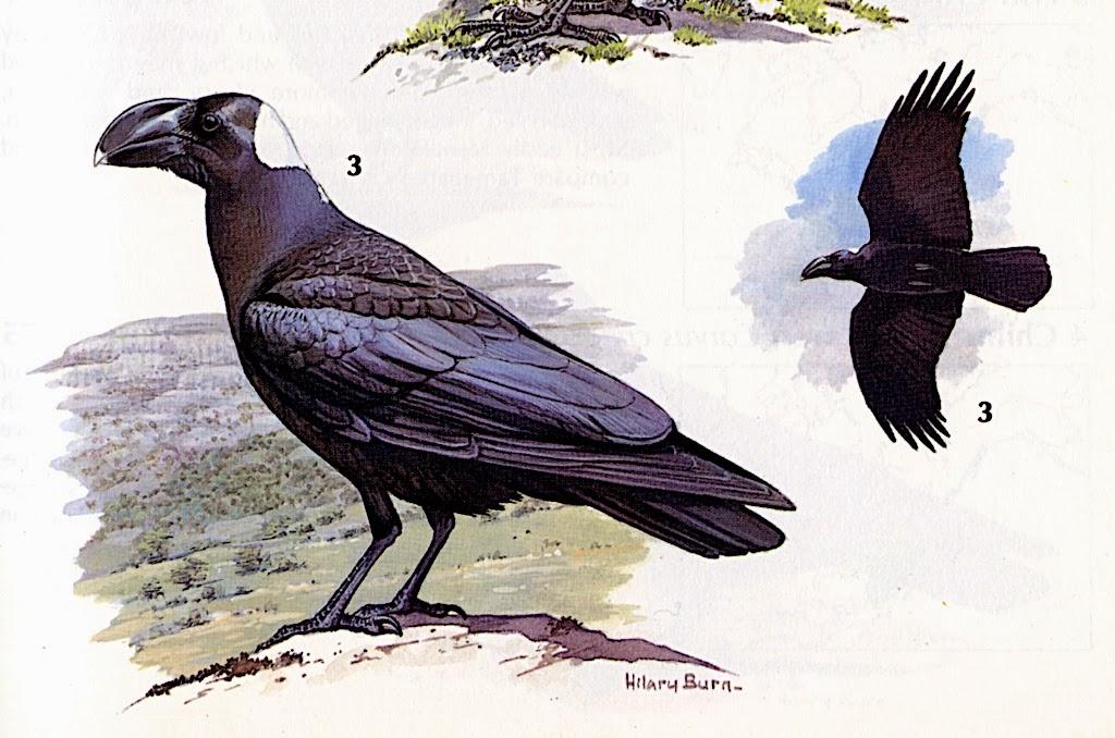 Crows Picking Over Prairie Burn On >> Antelope Valley College Blog December 2013