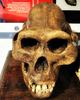 Crânio de Hominídeo, Museu Ufologia, Itaara (RS)