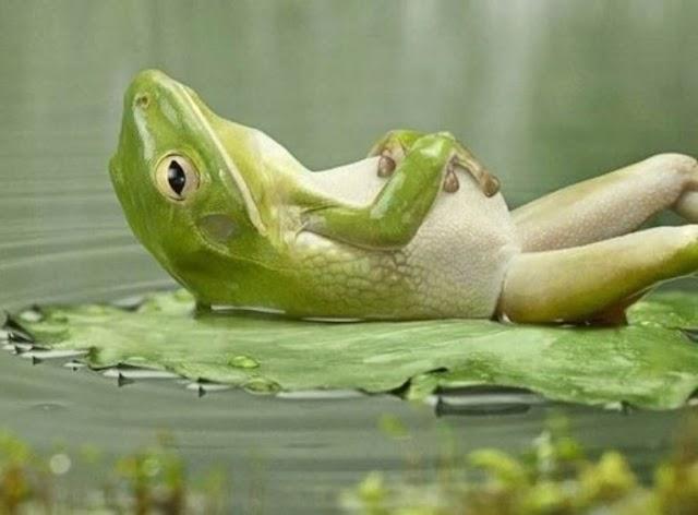 Chúng ta đang sống cuộc sống của một con ếch