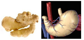 Ginger is linked with Stomach
