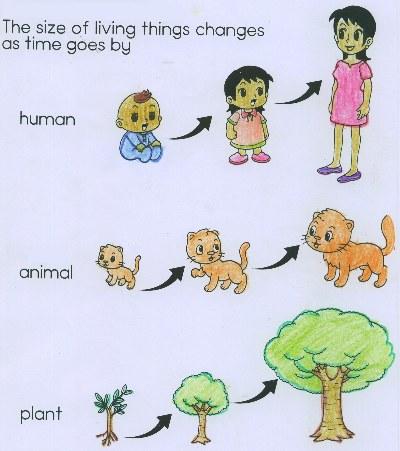 Living Things Reproduce