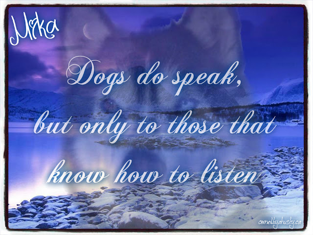 Dogs Do Speak - quote