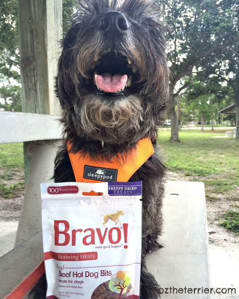 Bravo Pet Foods Hot Dog training treats make Oz the Terrier a happy dog