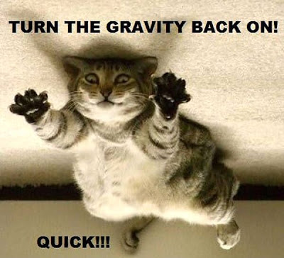 cat turn the gravity back on