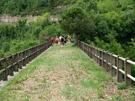 Travessant el pont del carilet amb un bell exemplar de pi blanc al mig de l'antiga via