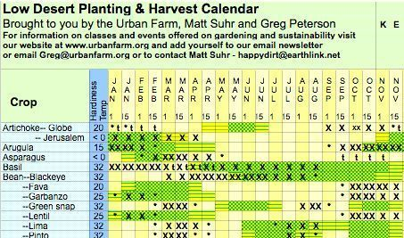 Desert gardening hub new arizona grown avocado tree - Fir tree planting instructions a vigorous garden ...