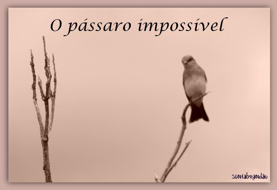 O pássaro impossível