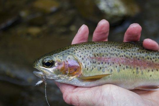 Photo of the Month: Spring Is For Dry Flies