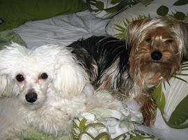Greg e Pug- meus bebês