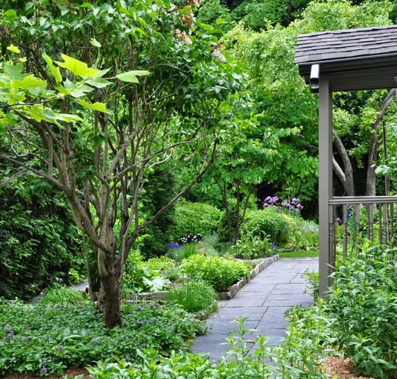 Private Small Garden Design: Three Dogs In A Garden: A Few Ideas For Small Vegetable