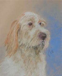 Spinone Italiano Dog Art By Cori Solomon