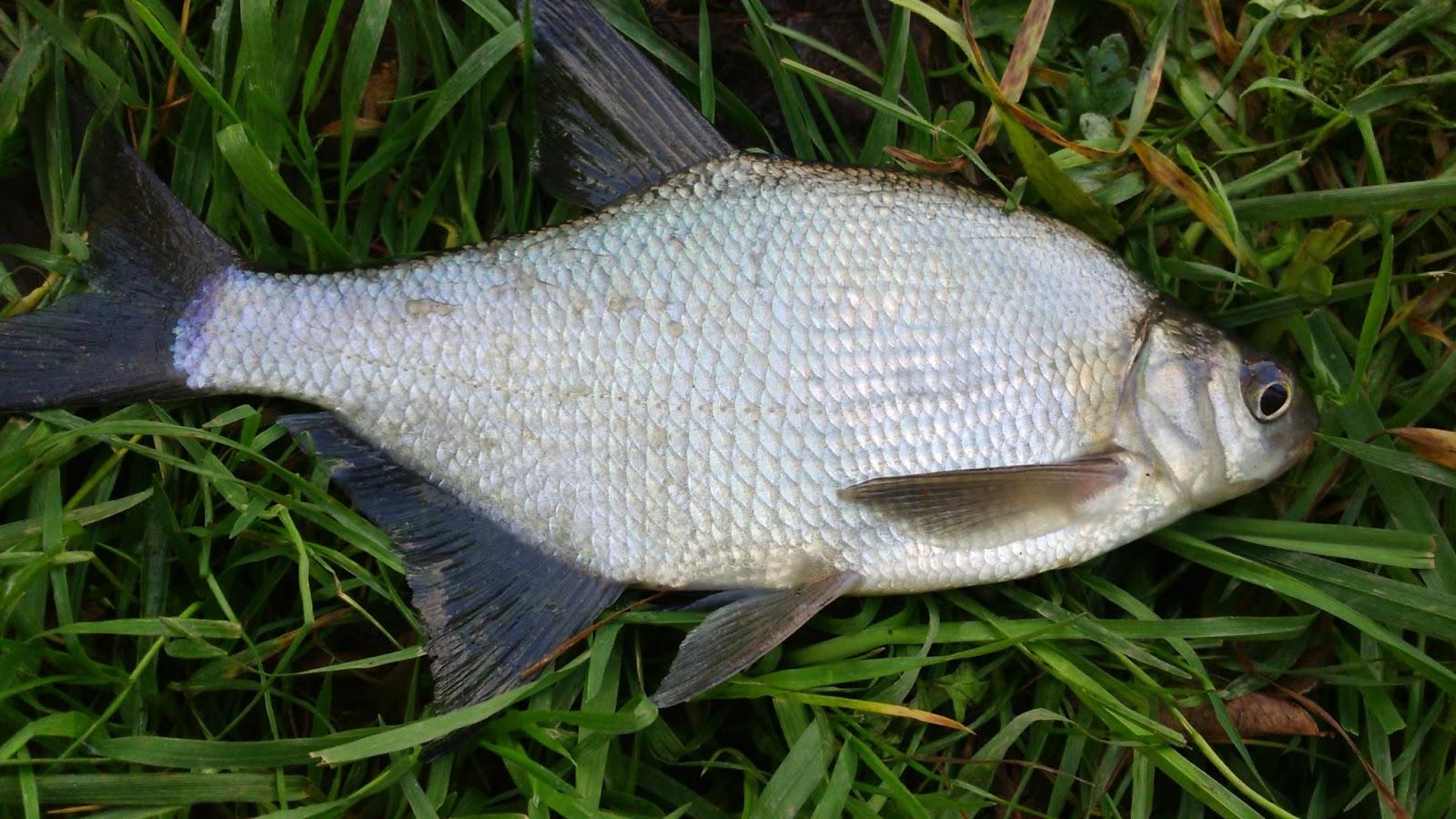 Le repos la pêche le domaine dOdessa