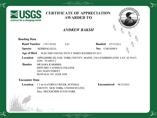 Birding Dude: Certification of Appreciation for reporting Banded ...