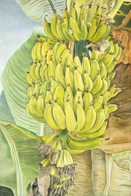 Lucian Freud - bananas, 1952.