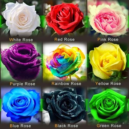 Abu Garden Teknik Menumbuhkan Bunga Mawar Dari Biji