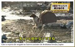 No Japão depois do terremoto e do Tsunami