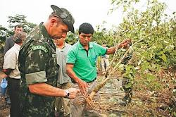 en El Chapare. oficial que acompaña al ministro brasileño comprueba cómo se erradica la plantación