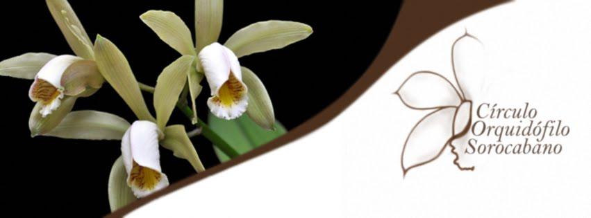 Círculo Orquidófilo Sorocabano - COS