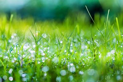 Papel de Parede Natureza Grama para pc hd grátis Nature desktop hd wallpaper image free