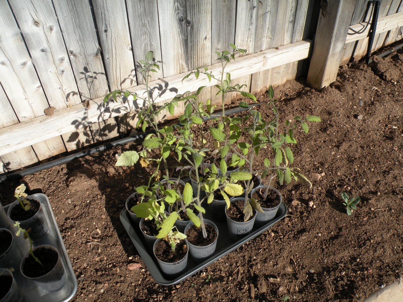Seedlings, 3 Months... | PandA Ford