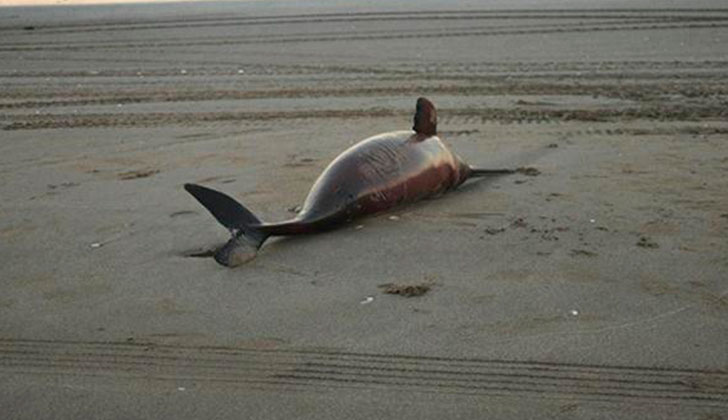 23 dead dolphins found along beaches south of Buenos Aires Argentina