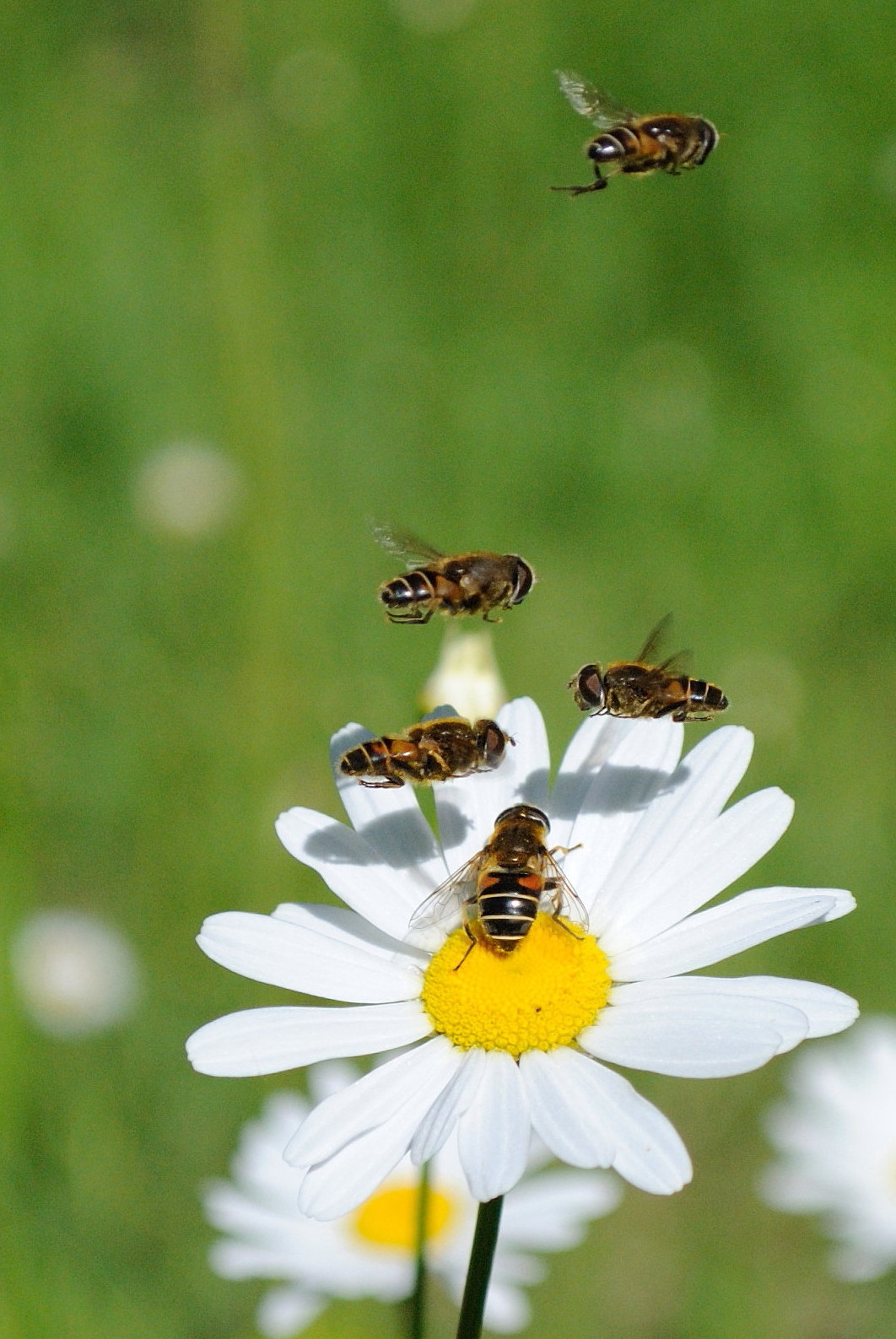 bee flower Pictures, Images & Photos | Photobucket