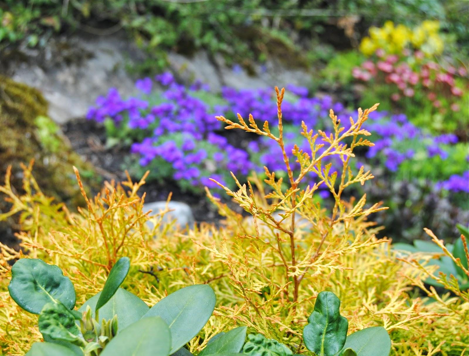 Ärligt och härligt om trädgård och natur -